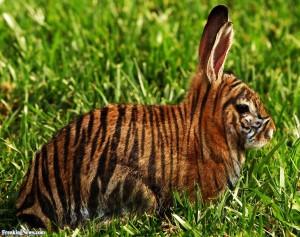 Tiger-Bunny-66088